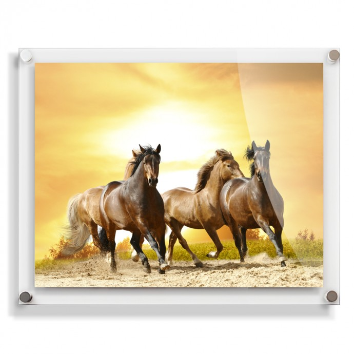 This Acrylic Photo Frame really sets off the horses beautifully.